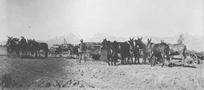 1909-Mules-in-Harness