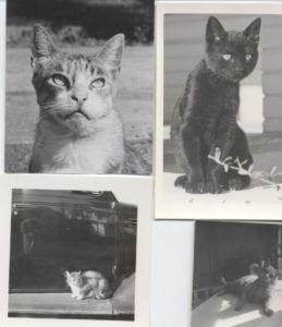 J-Shubert-Cat-urday